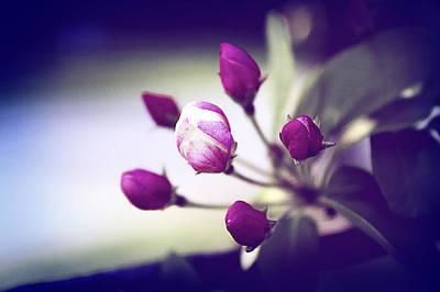 Photograph - Delicate Spring by Milena Ilieva