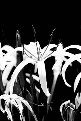 Photograph - Delicate White  by Elizabeth  Doran