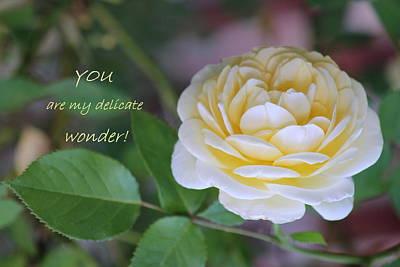 Photograph - Delicate Wonder by Deborah  Crew-Johnson