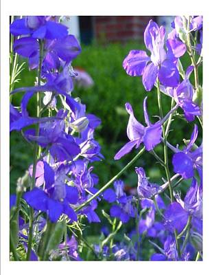 Art Print featuring the photograph Delicately Blue by Frank Wickham