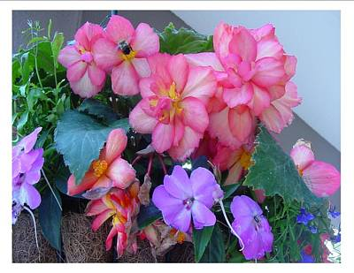 Art Print featuring the photograph Delightful Potpourri Of Pastels by Frank Wickham