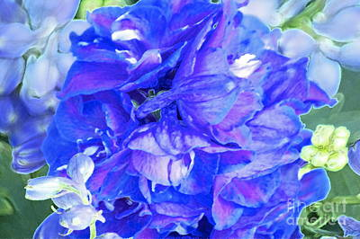 Delphinium Blue Art Print by Gwyn Newcombe
