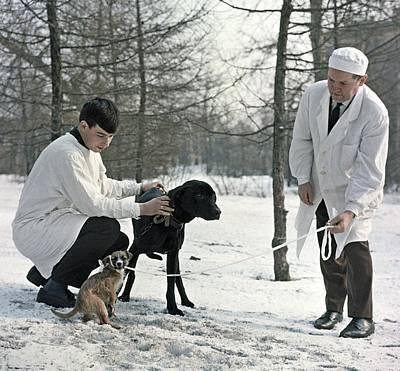 Demikhov's Laboratory Dogs, 1967 Art Print by Ria Novosti