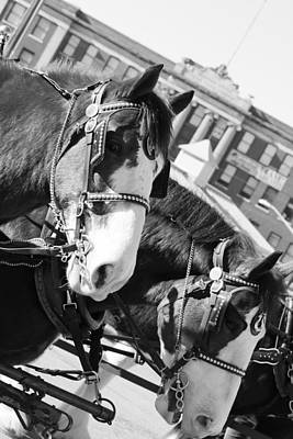 Photograph - Denver Stock Show by Colleen Coccia
