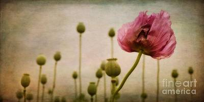 Depth Of Poppy Field Art Print by Priska Wettstein