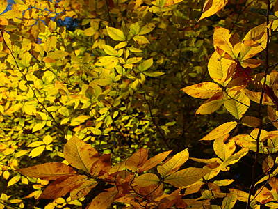 Fall Leaves Photograph - Depth Of Yellow by Allan Wrona