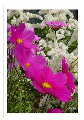 Art Print featuring the photograph Descendingly Pink by Frank Wickham