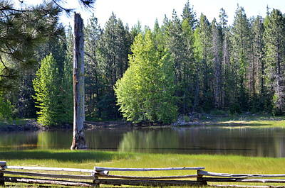 Rural Photograph - Deschutes National Forest by Linda Larson