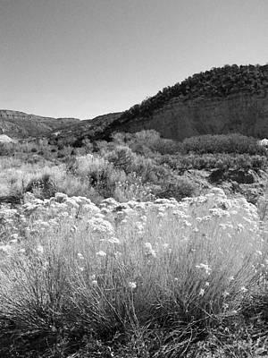 Photograph - Desert Beauty I - Black And White by Kathleen Grace