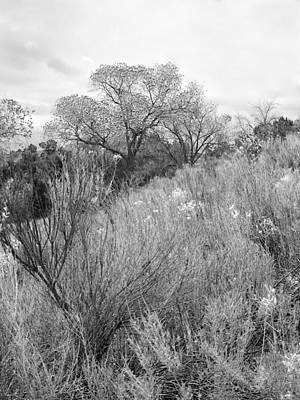 Photograph - Desert Beauty II Black And White by Kathleen Grace