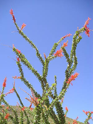 Desert Bloom Print by