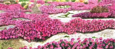 Colored Pencil Landscape Drawings Drawing - Desert Flowers by Glenda Zuckerman