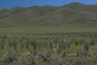 Photograph - Desert Grass by Sara Stevenson