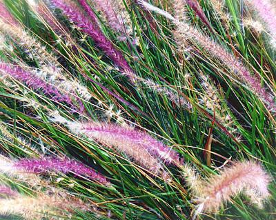 Photograph - Desert Grasses by Diane Wood