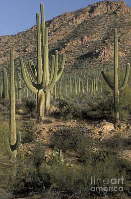 Photograph - Desert Guardians by Sandra Bronstein