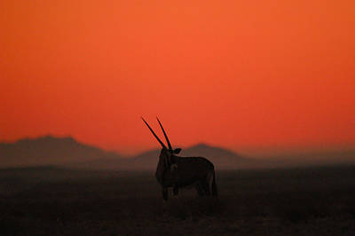 Photograph - Desert Horns by Alistair Lyne