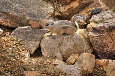 Anne Geddes Florals - Desert Squirrel 2 by Jessica Velasco