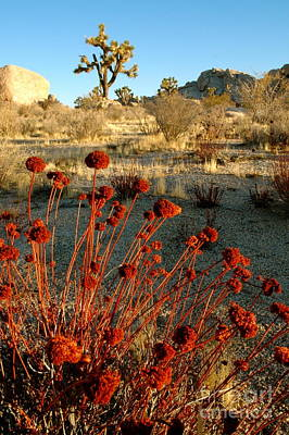 Photograph - Desert Surprise by Johanne Peale
