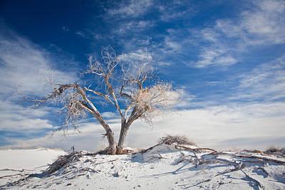 Desert Tree In White Sands Print by Ralf Kaiser