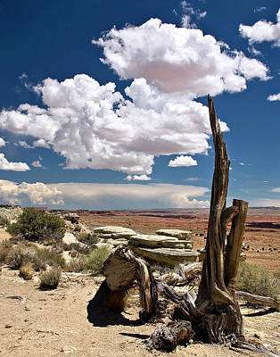 Photograph - Desert Tree Stump by Endre Balogh