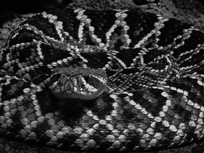 Designs In Nature Photograph - Designer Snake by Vijay Sharon Govender