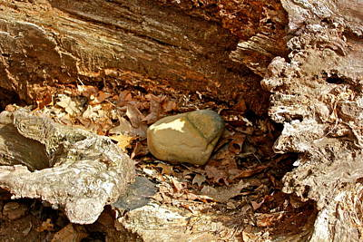 Photograph - Designs By Nature Fp-10 Rock Nest by Felix Zapata