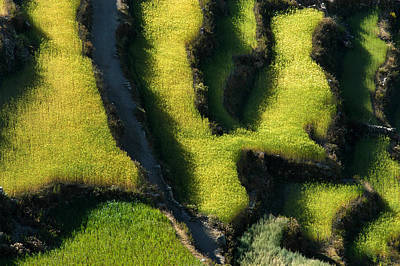 Crops Photograph - Detail Of A Crop. Republic Of Bolivia by Eric Bauer
