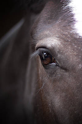 Photograph - Detailed Close Up Of Black Horse's Eye by Ethiriel  Photography