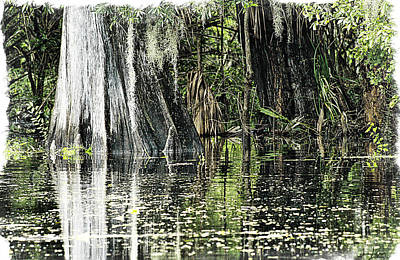 Details Of A Florida River Art Print by Janie Johnson
