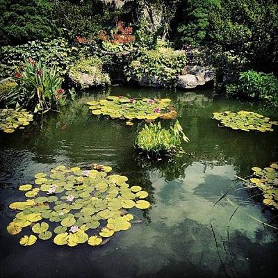 Lilies Wall Art - Photograph - #detroit #pond #belleisle #conservatory by Harvey Christian