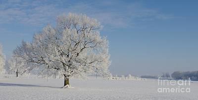 Romantik Photograph - Deutsche Eiche by Tanja Riedel