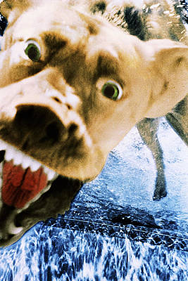 Photograph - Devil Dog by Jill Reger