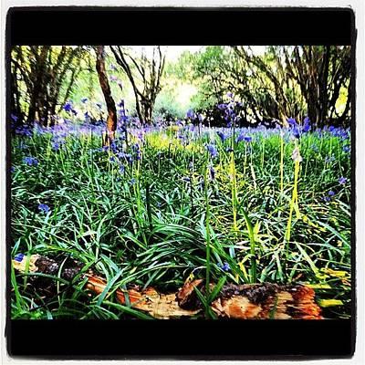 Woodland Photograph - #devon #bluebells #woodland by Fay Pead