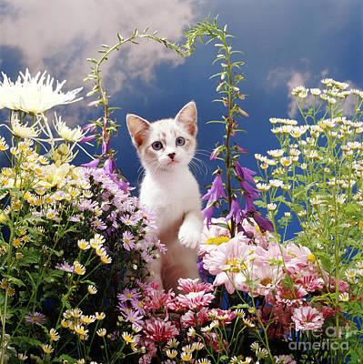 Animal Portraiture Photograph - Devon Rex-cross Kitten by Jane Burton