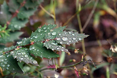 Photograph - Dew Covered - 0001 by S and S Photo