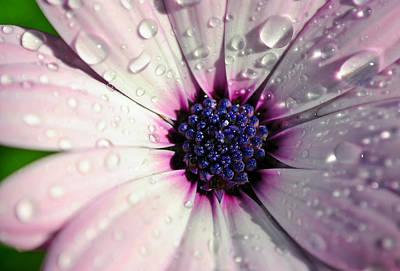 Dew On Flower Original
