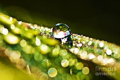 Dewdrop On Lemongrass Art Print by Thomas R Fletcher