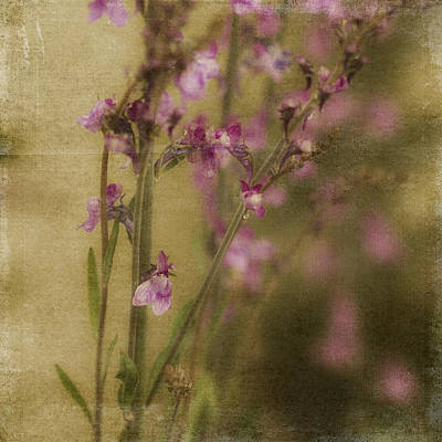Rainy Day Photograph - Dewdropped Garden by Bonnie Bruno