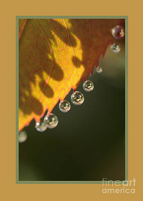 Photograph - Dewy Bling  by Nancy Greenland