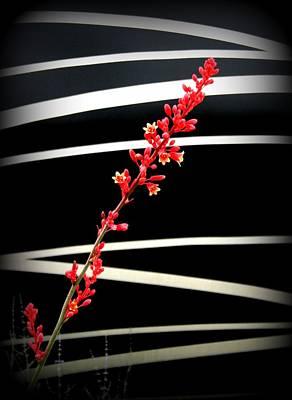Photograph - Diagonals by David Dunham