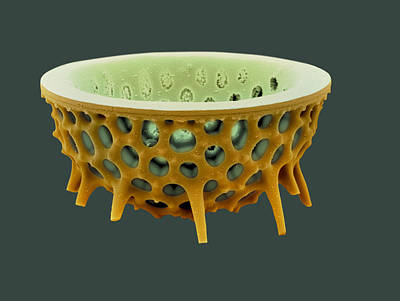 Diatom, Sem Art Print by David Mccarthy