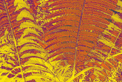 Digital Ferns Art Print by Colleen Cannon