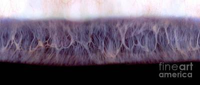 Photograph - Digital Inversion Of Human Eye by Raul Gonzalez Perez