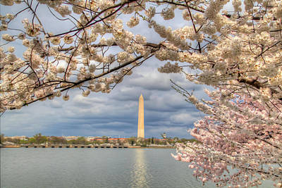 Thomas Jefferson Digital Art - Digital Liquid - Cherry Blossoms Washington Dc 4 by Metro DC Photography