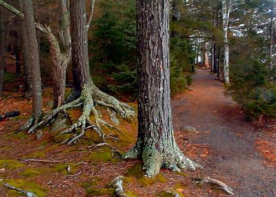 Photograph - Digital Painting Marykedge Trail Nova Scotia Canada by William OBrien
