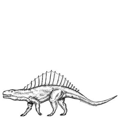Illustrate Drawing - Dimetrodon - Dinosaur by Karl Addison