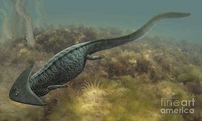 Salamanders Digital Art - Diplocaulus Salamandroides by Sergey Krasovskiy