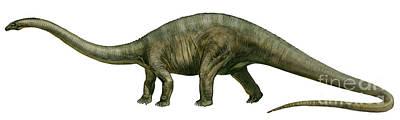 Diplodocus, A Prehistoric Era Dinosaur Print by Sergey Krasovskiy