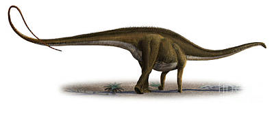 Diplodocus Longus, A Prehistoric Era Art Print by Sergey Krasovskiy