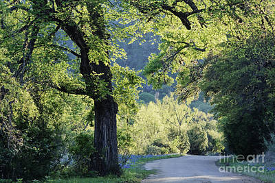 Dirt Road Through Countryside Art Print